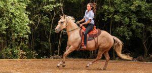 Natural Horsemanship NHS