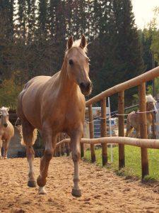 Pferde auf der Kulturfarm