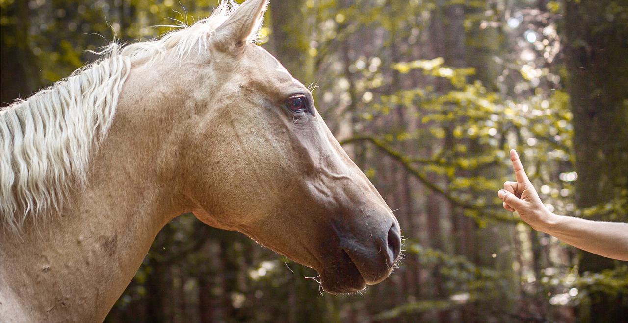 Führungskräfte stärken durch Pferdegestütztes Coaching