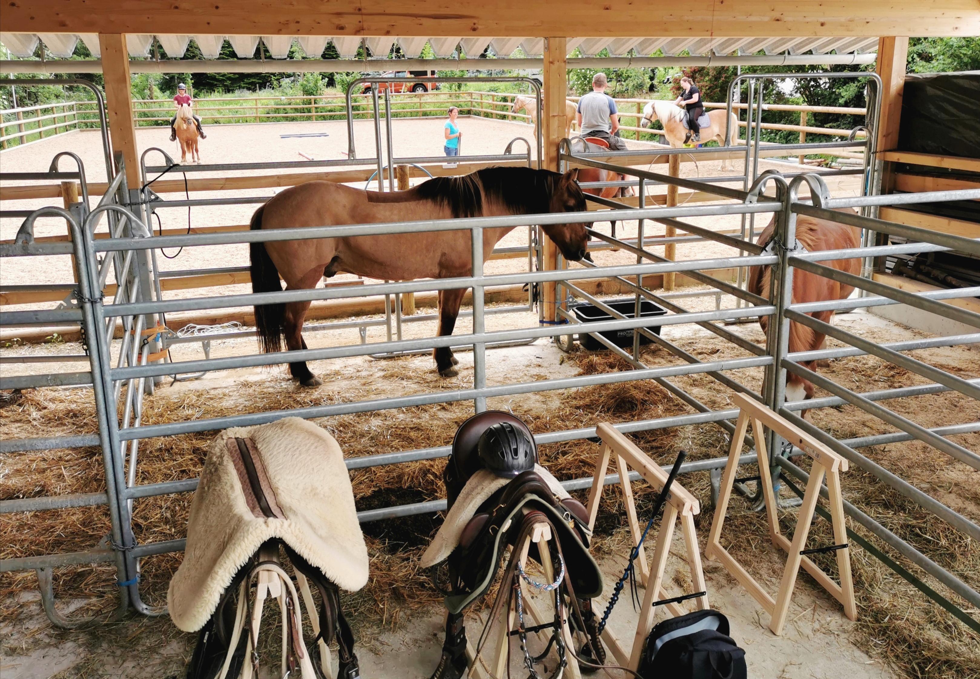 Pferdepension Gastboxen