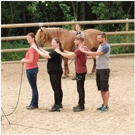 Gasttraining Natural Horsemanship