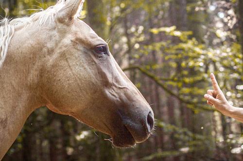 Pferdegestütztes Coaching bei Augsburg, Bayern
