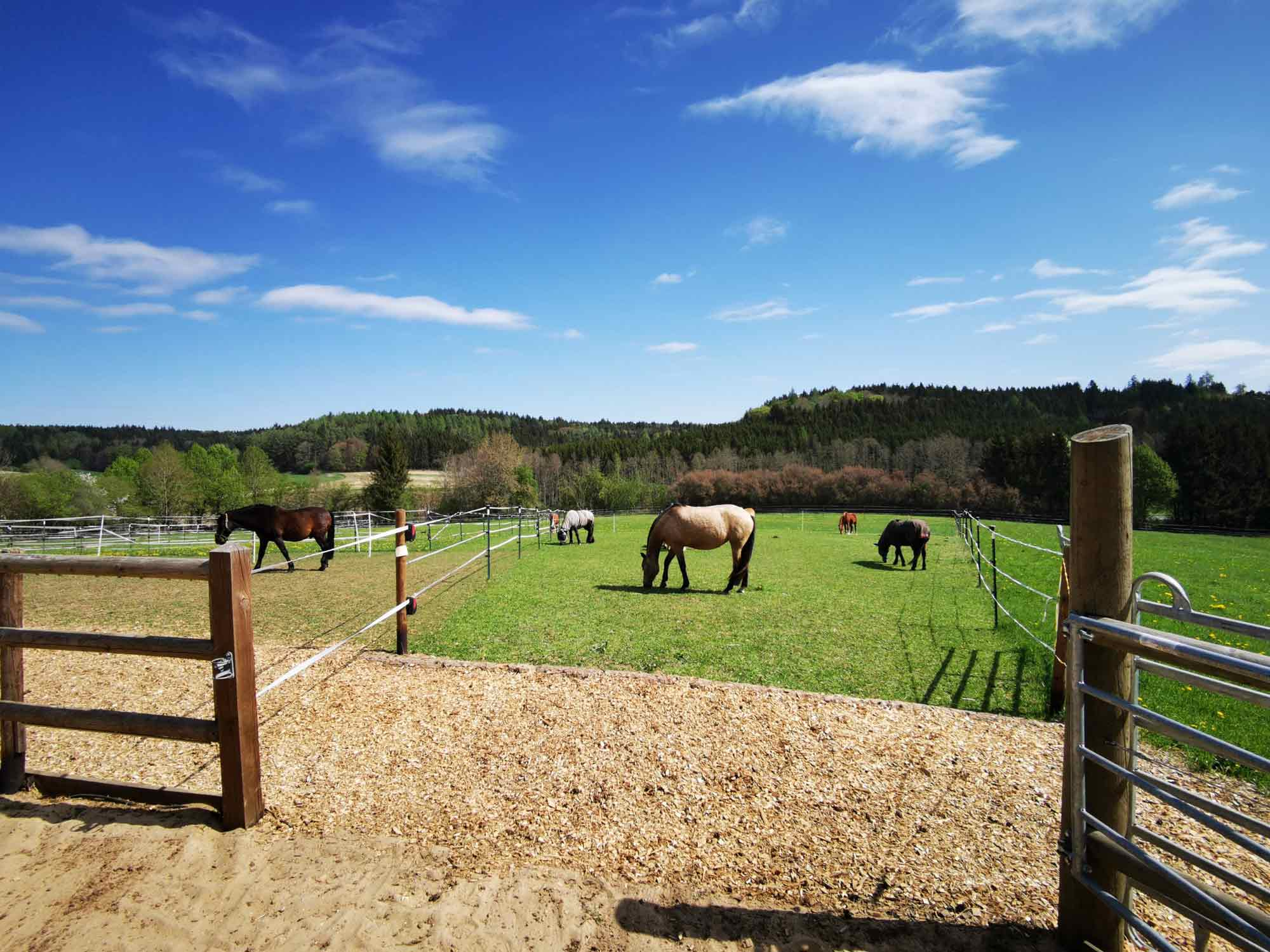 Pferdekoppel & Farmleben auf der Kulturfarm